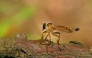 宽屏昆虫特写壁纸 动物壁纸