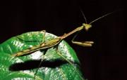 昆虫特写壁纸 动物壁纸