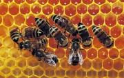 昆虫写真壁纸 动物壁纸