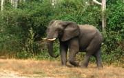 陆地巨无霸 大象 动物壁纸
