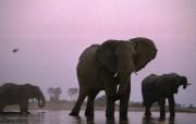 陆地巨无霸 大象 陆地巨无霸 大象 动物壁纸