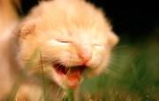 绿草上的可爱小猫咪宽 动物壁纸