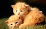 绿草上的可爱小猫咪宽屏壁纸 壁纸2 绿草上的可爱小猫咪宽 动物壁纸