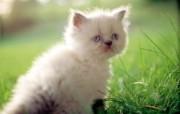 绿草上的可爱小猫咪宽屏壁纸 壁纸3 绿草上的可爱小猫咪宽 动物壁纸