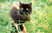 绿草上的可爱小猫咪宽屏壁纸 壁纸4 绿草上的可爱小猫咪宽 动物壁纸