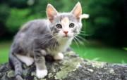 绿草上的可爱小猫咪宽屏壁纸 壁纸5 绿草上的可爱小猫咪宽 动物壁纸