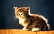 绿草上的可爱小猫咪宽屏壁纸 壁纸6 绿草上的可爱小猫咪宽 动物壁纸