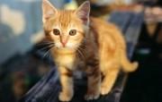 绿草上的可爱小猫咪宽屏壁纸 壁纸7 绿草上的可爱小猫咪宽 动物壁纸