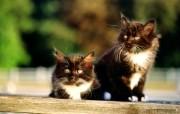 绿草上的可爱小猫咪宽屏壁纸 壁纸8 绿草上的可爱小猫咪宽 动物壁纸