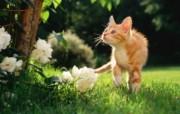 绿草上的可爱小猫咪宽屏壁纸 壁纸12 绿草上的可爱小猫咪宽 动物壁纸