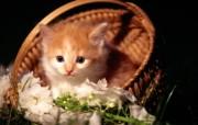 绿草上的可爱小猫咪宽屏壁纸 壁纸13 绿草上的可爱小猫咪宽 动物壁纸