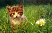 绿草上的可爱小猫咪宽屏壁纸 壁纸14 绿草上的可爱小猫咪宽 动物壁纸