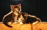 绿草上的可爱小猫咪宽屏壁纸 壁纸15 绿草上的可爱小猫咪宽 动物壁纸