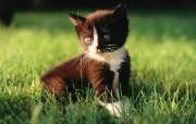 绿草上的可爱小猫咪宽屏壁纸 壁纸17 绿草上的可爱小猫咪宽 动物壁纸