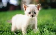 绿草上的可爱小猫咪宽屏壁纸 壁纸19 绿草上的可爱小猫咪宽 动物壁纸