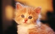 绿草上的可爱小猫咪宽屏壁纸 壁纸21 绿草上的可爱小猫咪宽 动物壁纸