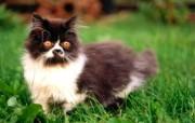 绿草上的可爱小猫咪宽屏壁纸 壁纸23 绿草上的可爱小猫咪宽 动物壁纸