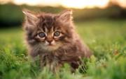 绿草上的可爱小猫咪宽屏壁纸 壁纸25 绿草上的可爱小猫咪宽 动物壁纸