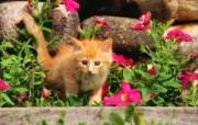 绿草上的可爱小猫咪宽屏壁纸 壁纸30 绿草上的可爱小猫咪宽 动物壁纸