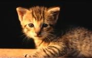 绿草上的可爱小猫咪宽屏壁纸 壁纸31 绿草上的可爱小猫咪宽 动物壁纸
