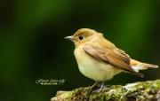 树林小鸟 春天可爱小鸟图片壁纸 绿林仙子春天可爱小鸟壁纸第二辑 动物壁纸