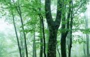 绿色树木壁纸 动物壁纸