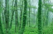 绿色系列树木绿叶篇 动物壁纸