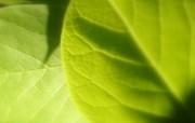 绿色植物壁纸下辑 动物壁纸