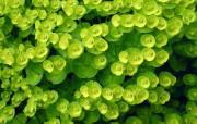绿色专辑 动物壁纸