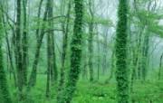 绿叶宽屏系列 160 动物壁纸