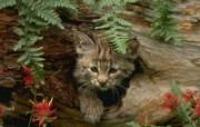 猫壁纸 动物壁纸