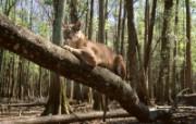 猫科类野兽动物壁纸 第三辑 壁纸14 猫科类野兽动物壁纸 动物壁纸
