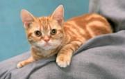 猫咪高清写真 16 动物壁纸
