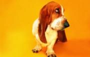 猫咪狗狗的趣怪神态 动物壁纸