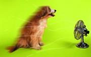 吹风扇 趣味可爱狗狗图片壁纸 猫咪狗狗的趣怪神态 动物壁纸