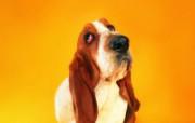 狗狗趣怪表情 趣味可爱狗狗图片壁纸 猫咪狗狗的趣怪神态 动物壁纸