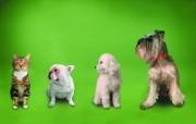 同类 趣味可爱狗狗图片壁纸 猫咪狗狗的趣怪神态 动物壁纸