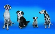 趣怪狗狗合照 趣味可爱狗狗图片壁纸 猫咪狗狗的趣怪神态 动物壁纸