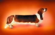 超长腊肠狗 趣味可爱狗狗图片壁纸 猫咪狗狗的趣怪神态 动物壁纸