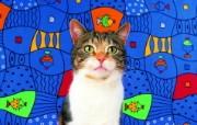 鱼 趣味可爱小猫图片壁纸 猫咪狗狗的趣怪神态 动物壁纸