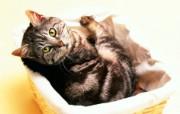 古怪的表情 趣味可爱小猫图片壁纸 猫咪狗狗的趣怪神态 动物壁纸