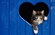 猫咪生活剪影 16 动物壁纸