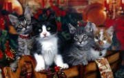 猫咪生活剪影二壁纸 Funny cat wallpapers 动物壁纸