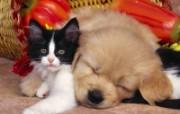 猫咪写真 第十一辑 动物壁纸
