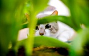 猫咪写真(二) 动物壁纸