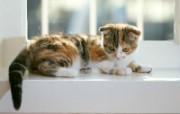 猫咪写真特辑 动物壁纸