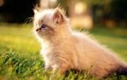 毛绒可爱猫宝宝写真 毛绒绒小猫宝宝壁纸 毛绒可爱猫宝宝写真 动物壁纸