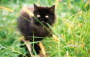 毛绒可爱猫宝宝写真 黑色波斯猫宝宝壁纸 毛绒可爱猫宝宝写真 动物壁纸
