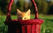 毛绒可爱猫宝宝写真 捉迷藏的小猫咪壁纸 毛绒可爱猫宝宝写真 动物壁纸