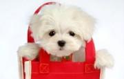 毛茸茸小狗狗写真壁纸 动物壁纸